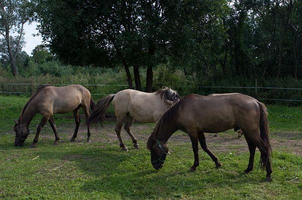 Gospodarstwo agrotyrystyczne Bogdanowiczów - Konie