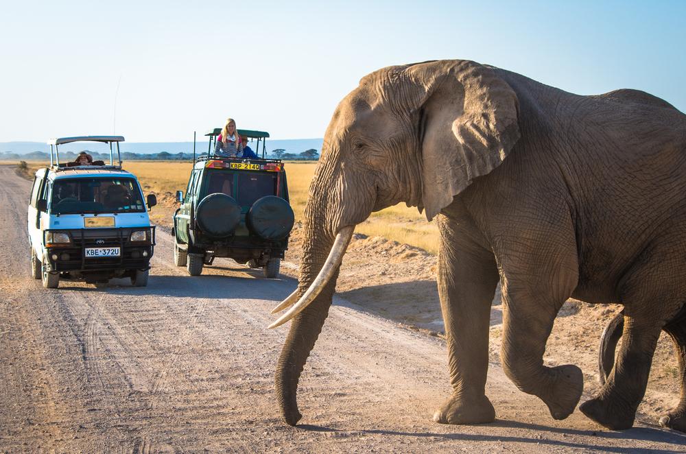 Kenia - safari