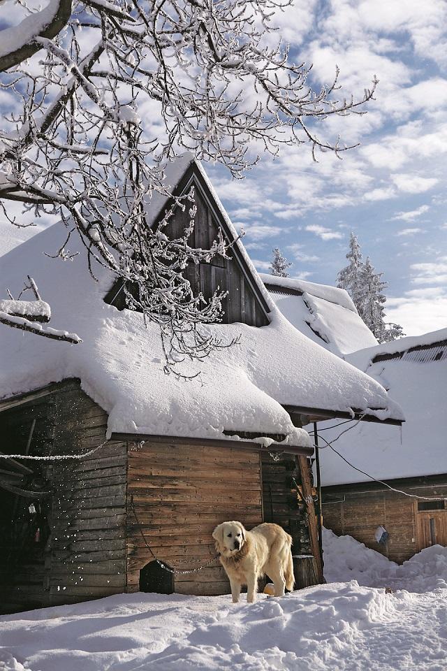 Małe Ciche, Czujny owczarek pilnuje jednego z ostatnich gospodarstw na Tarasówce